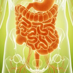 Der Darm beeinflusst unser gesamtes Befinden