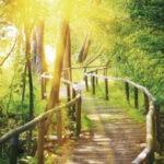 Was ist Cosmogetic Healing und was bewirkt es?