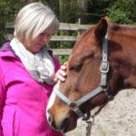 Herzwege mit Pferden Seminare